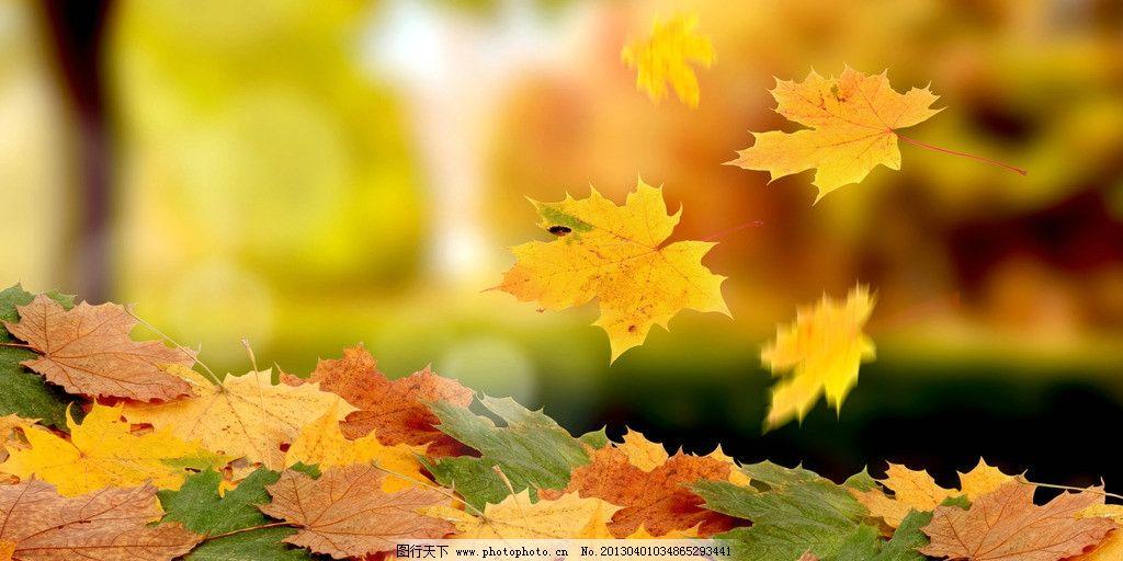 幼儿园幼儿绘画秋天的落叶