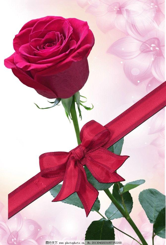 玫瑰花 彩带 飘带 丝带 其他设计 广告设计 矢量