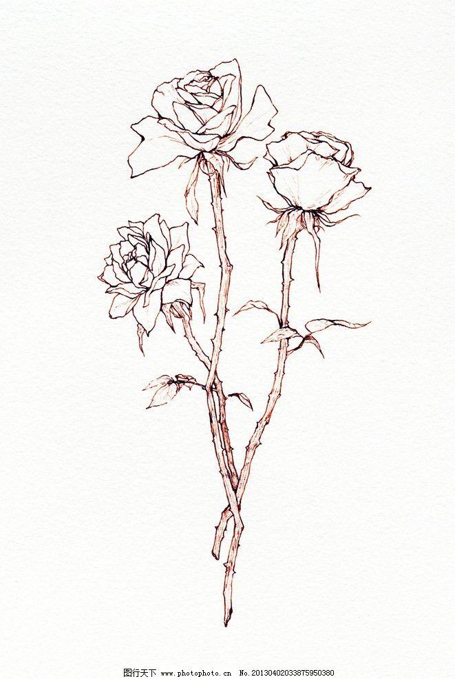 手绘玫瑰线稿素材图片