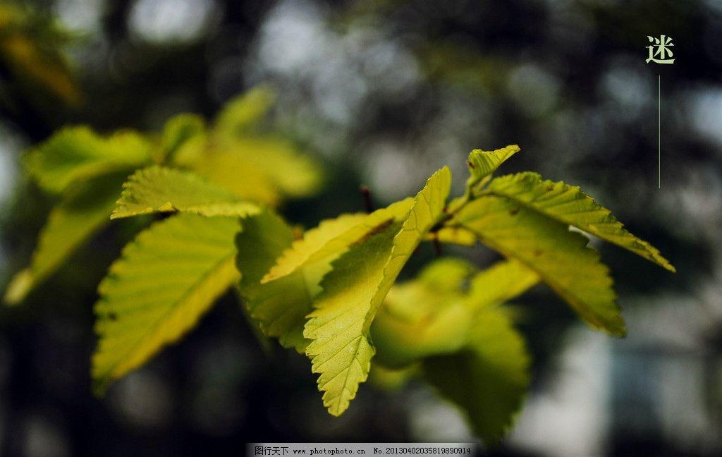 树叶 摄影 绿色 叶子 树 树木树叶 生物世界 300dpi jpg