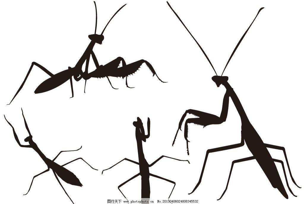 益虫 广斧螳螂 宽腹螳螂 动物世界 细致 生物世界 线条 黑白图 矢量