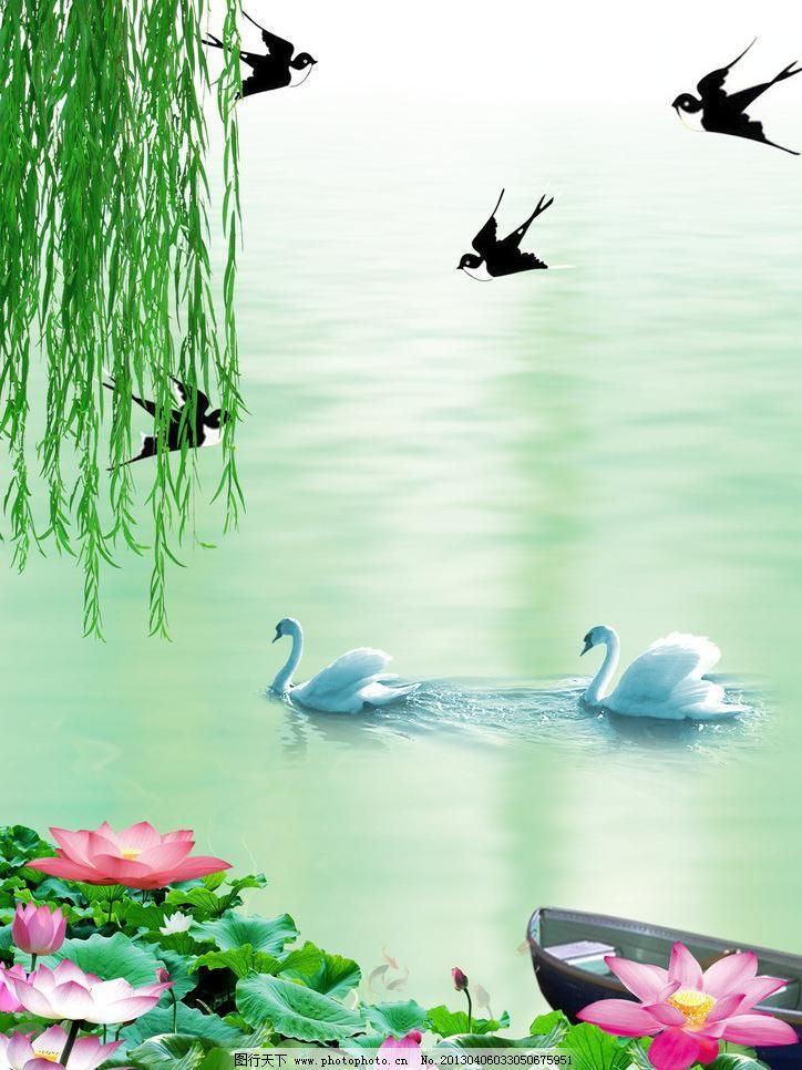 春燕模板下载 春燕 柳树 垂柳 湖水 天鹅 小船 荷花 荷叶 燕子 花苞图片