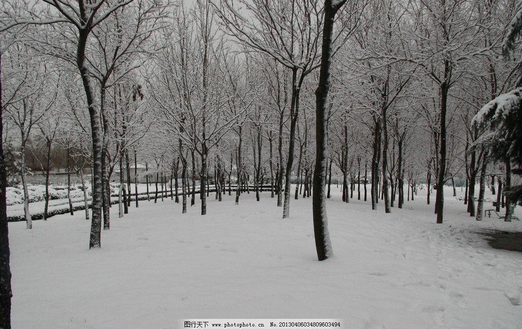 青岛树林雪景图片_自然风景_自然景观_图行天下图库