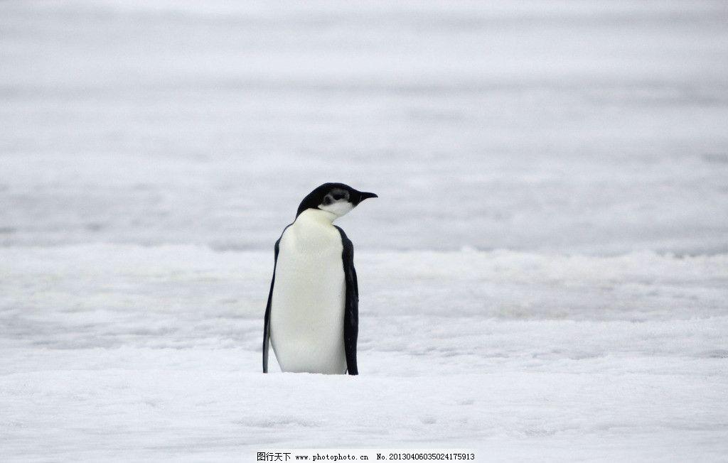 壁纸 动物 企鹅 1024_652
