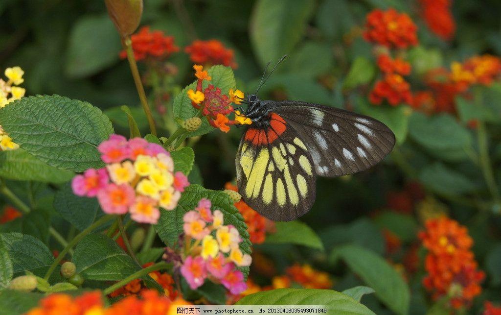 科技小制作蝴蝶