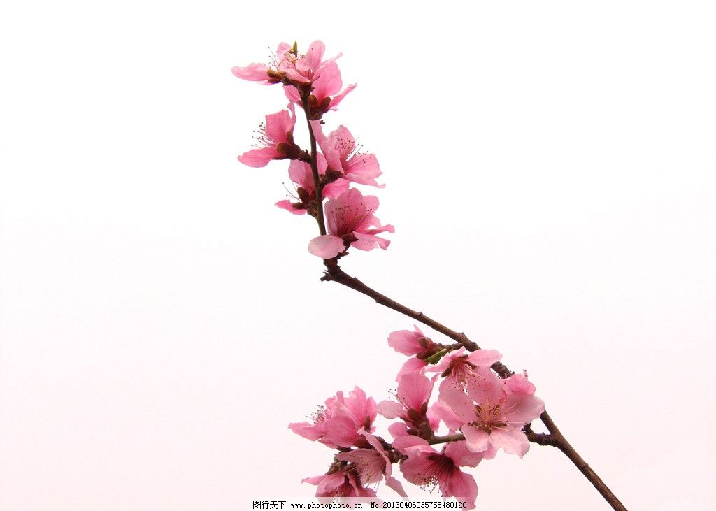 太空泥桃花制作步骤