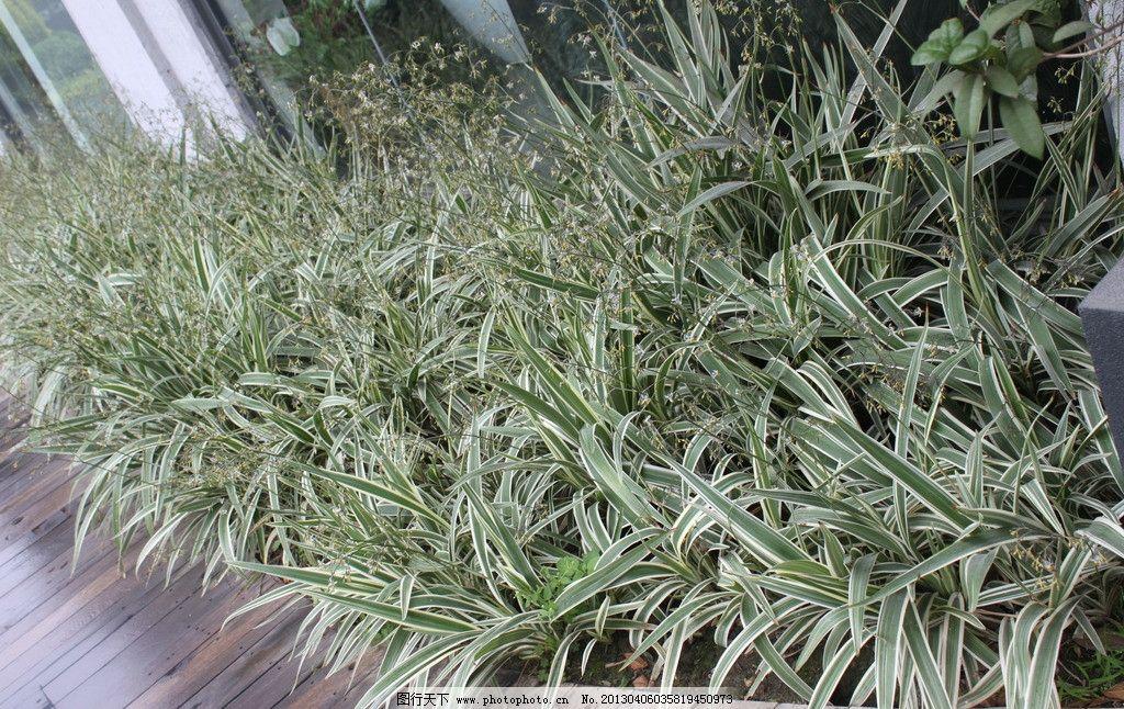 植物 芳村 1850创意园 入口景观 现代设计产业园 植物搭配 丛植 树木