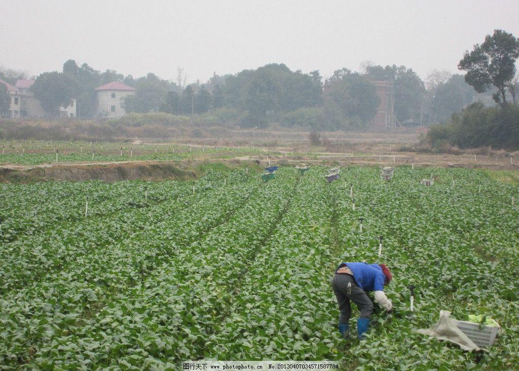 蔬菜基地 株洲县松西子 生态 大棚蔬菜 种植基地 菜地 菜园 农村 庄园
