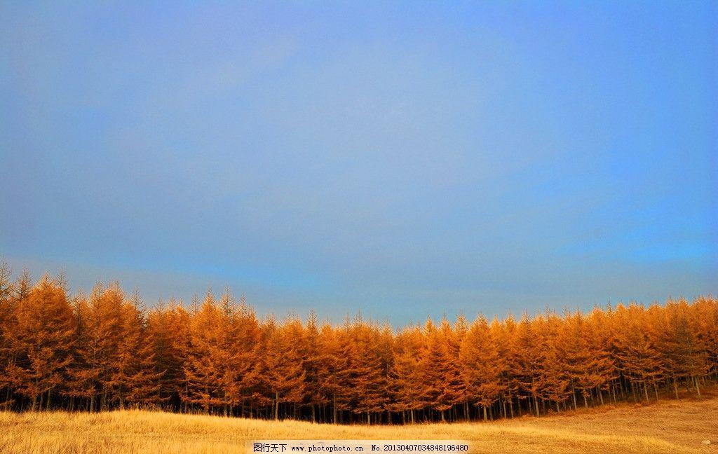 秋天的内蒙古 草原 圣水梁 黄色 蓝天 树林 金秋 摄影