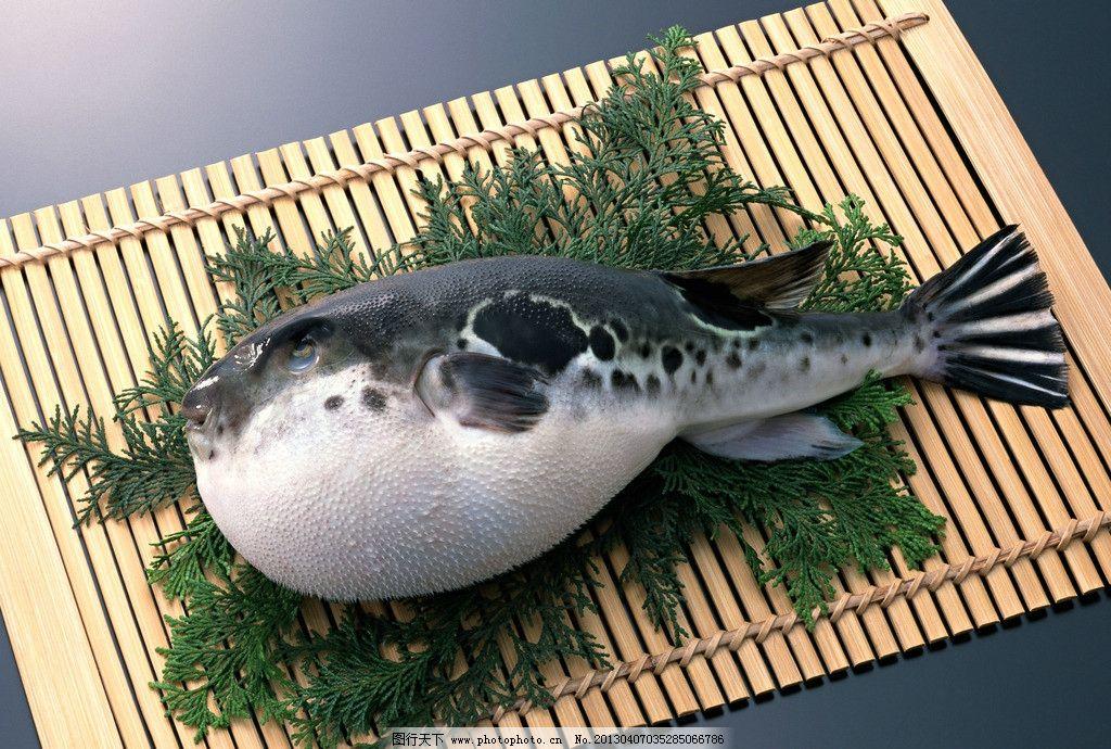 河豚鱼图片