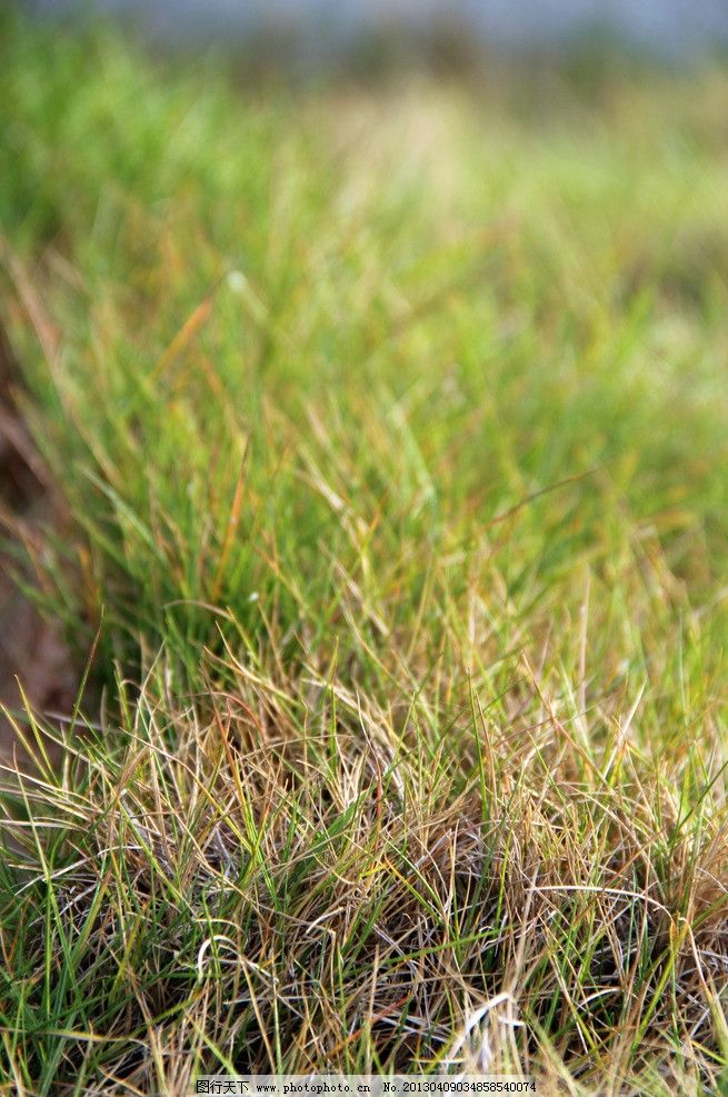 草丛近景特写 草坪 植物 微距 摄影 景物 自然风景 自然景观