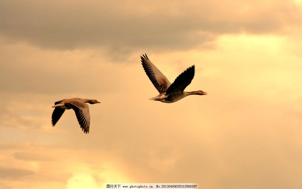 鸟飞 草地 风景 旅游 天空 摄影