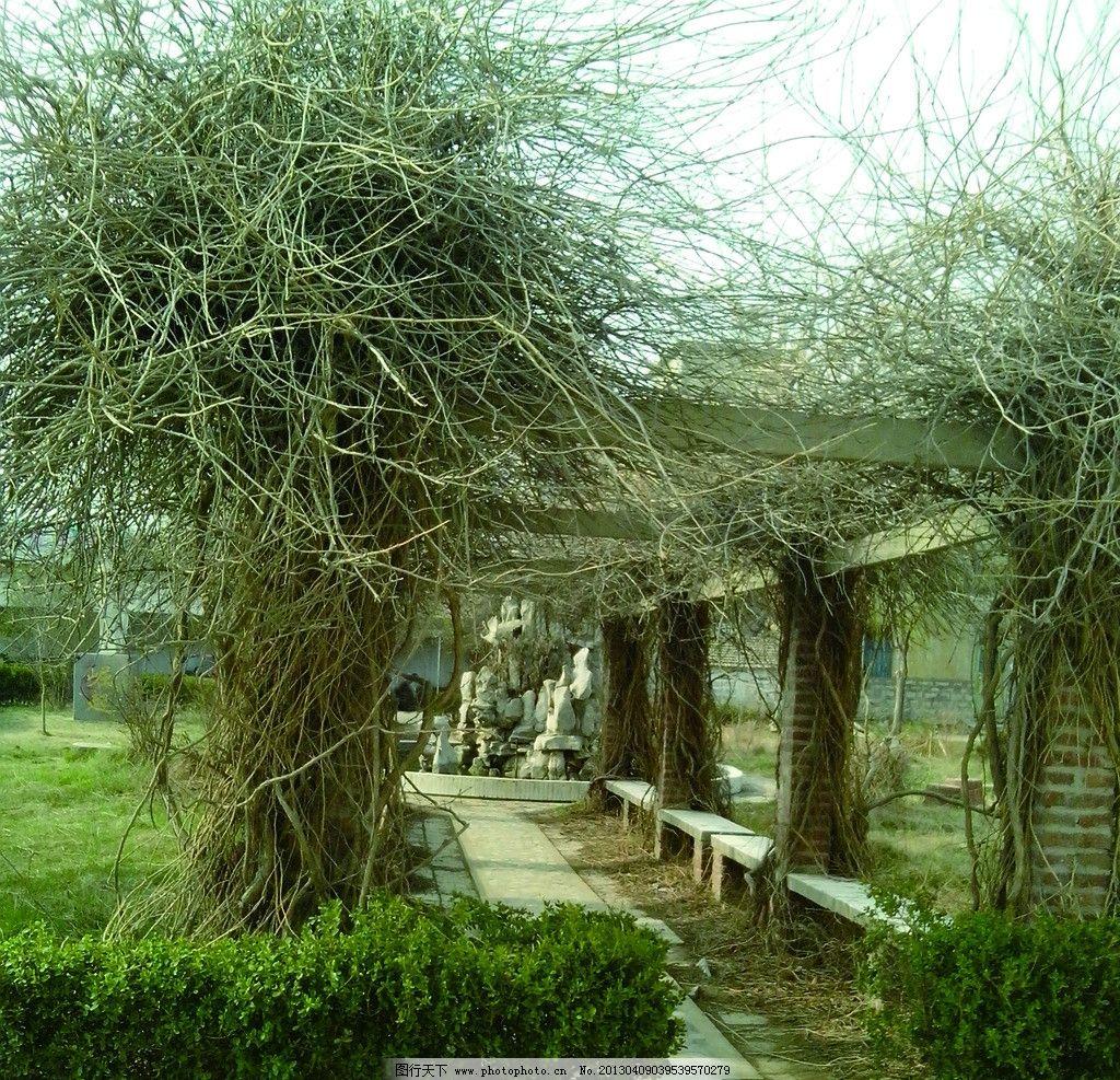 风景一角 长廊 校园一角 藤蔓 凉亭 花草 树木 园林建筑 建筑园林图片