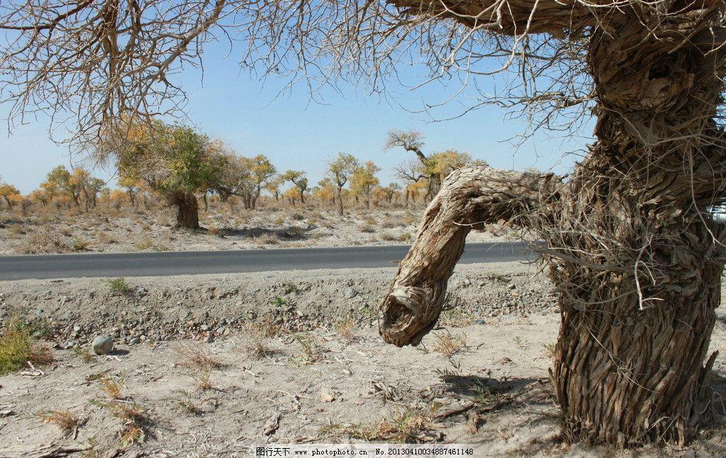 哈密伊吾胡杨林 新疆 古树 自然 新疆哈密伊吾胡杨林保护区 自然风景