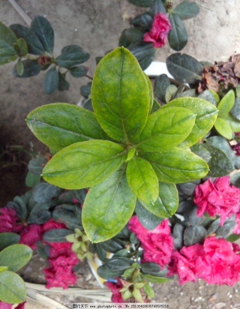 绿色植物 叶子 绿叶 小叶子 植物 摄影 红花 花草 生物世界 72dpi jpg