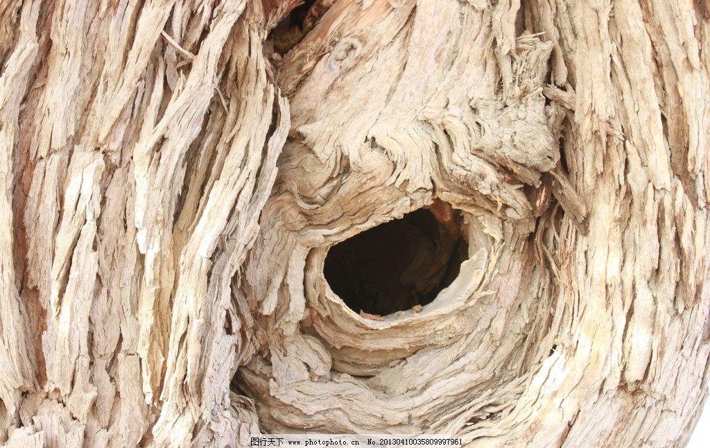 哈密伊吾胡杨林 新疆 古树 自然 摄影