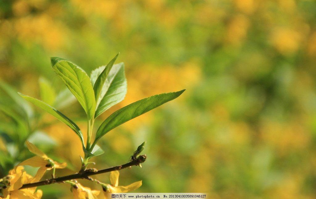 春叶 春 树叶 春天 绿色 树木 树木树叶 生物世界 摄影 72dpi jpg
