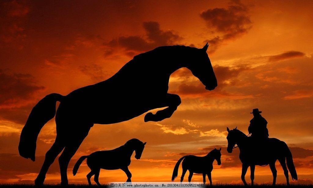夕阳时的动物图片