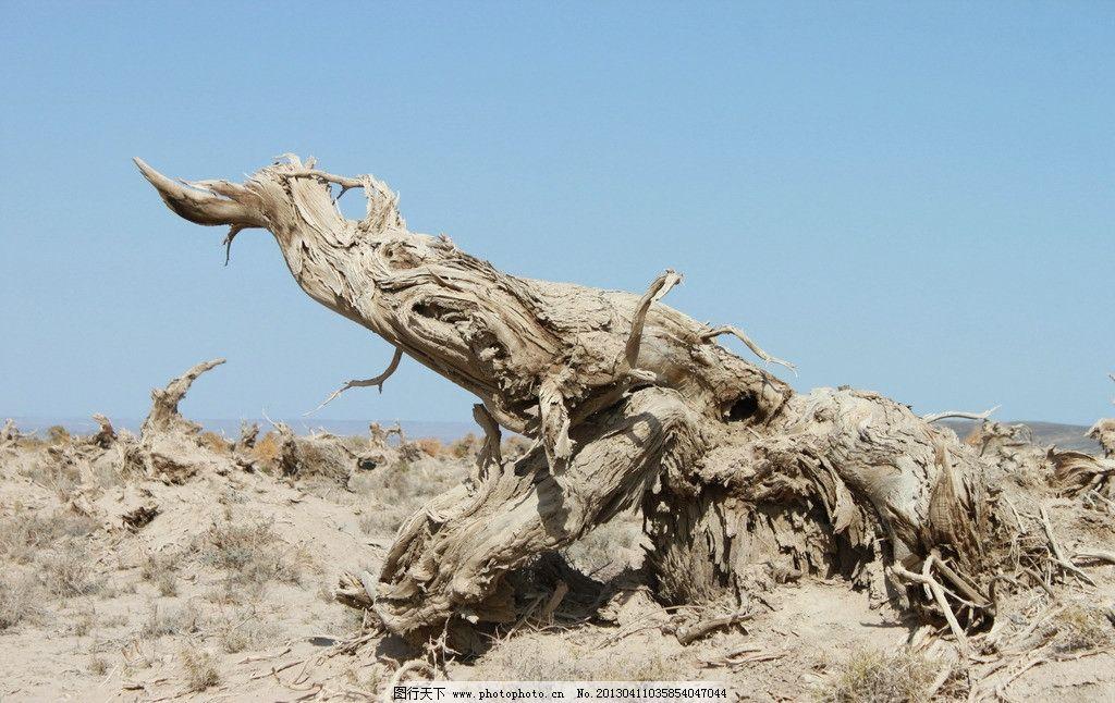 哈密伊吾胡杨林 新疆 自然 古树 树干 树木 枯树 摄影