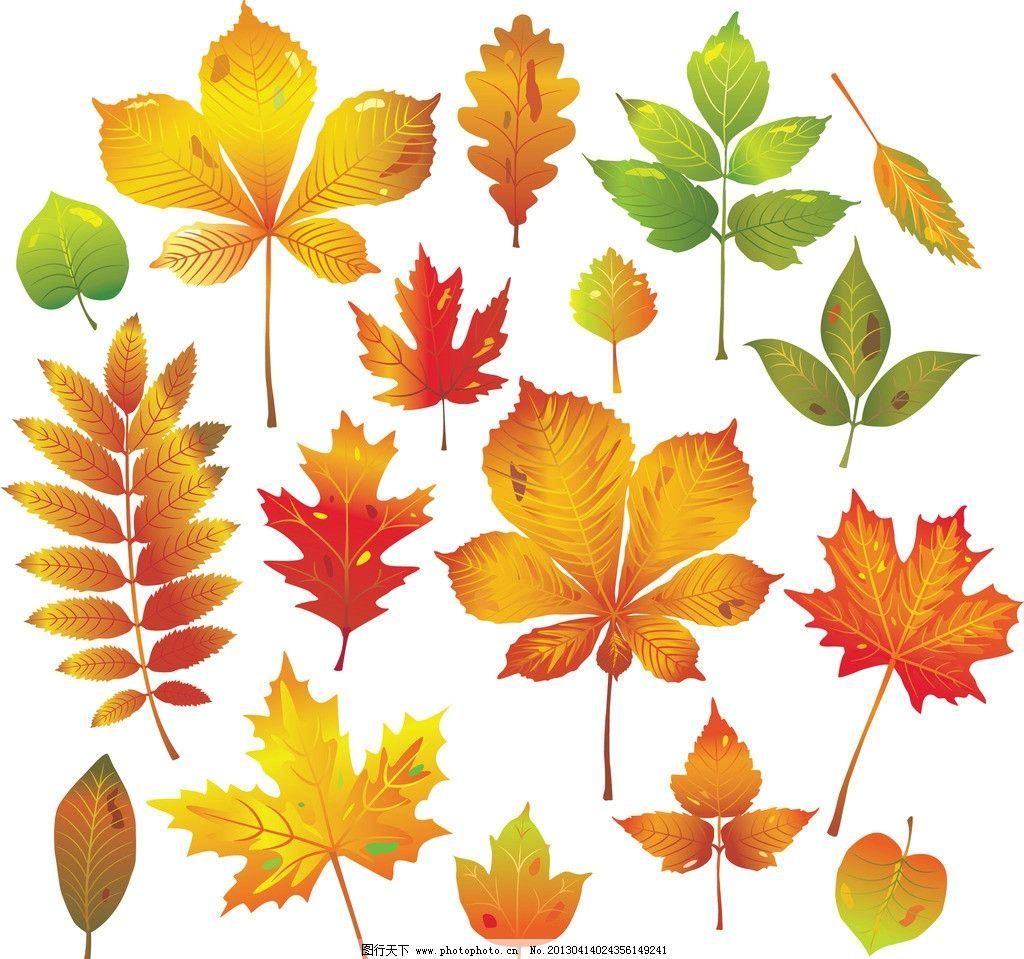 各种叶子矢量图 枫叶 叶草 松树叶 梧桐叶 樟树叶 其他 自然景观 矢量