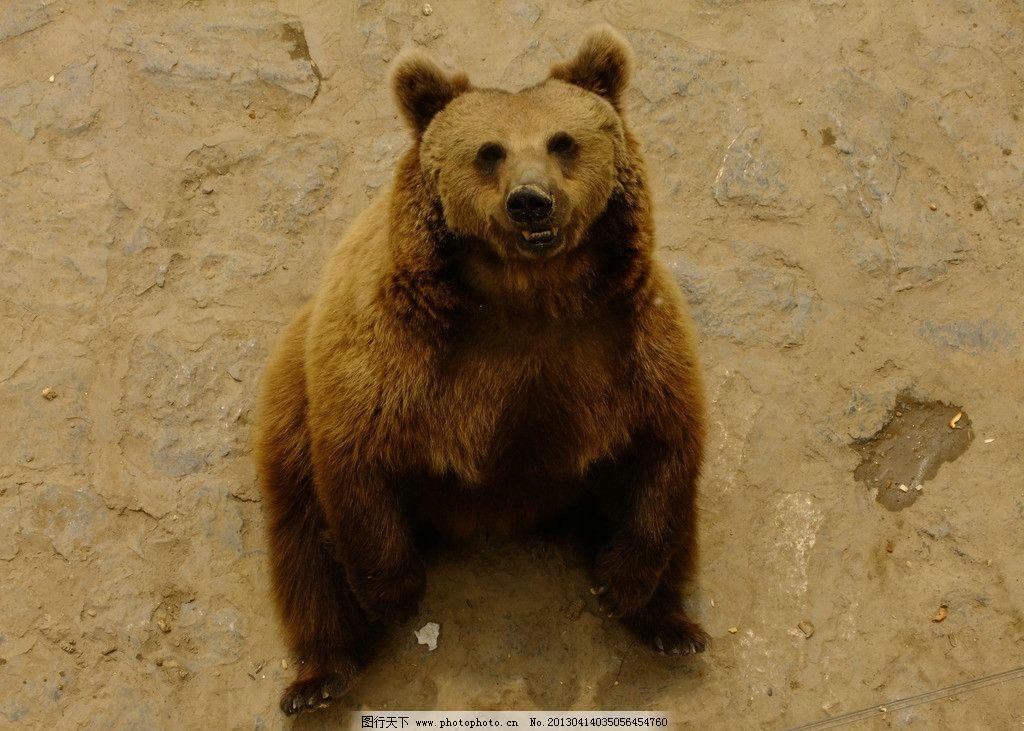 灰熊 动物园 石家庄 熊园 鹿泉 摄影