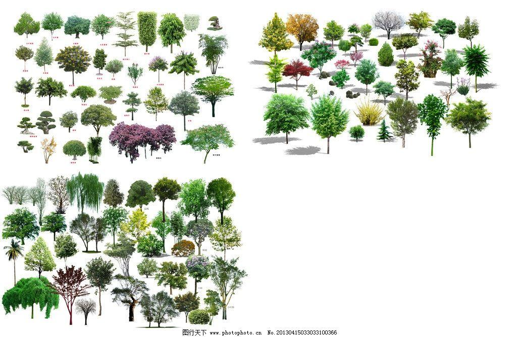 园林绿化植物树木图片