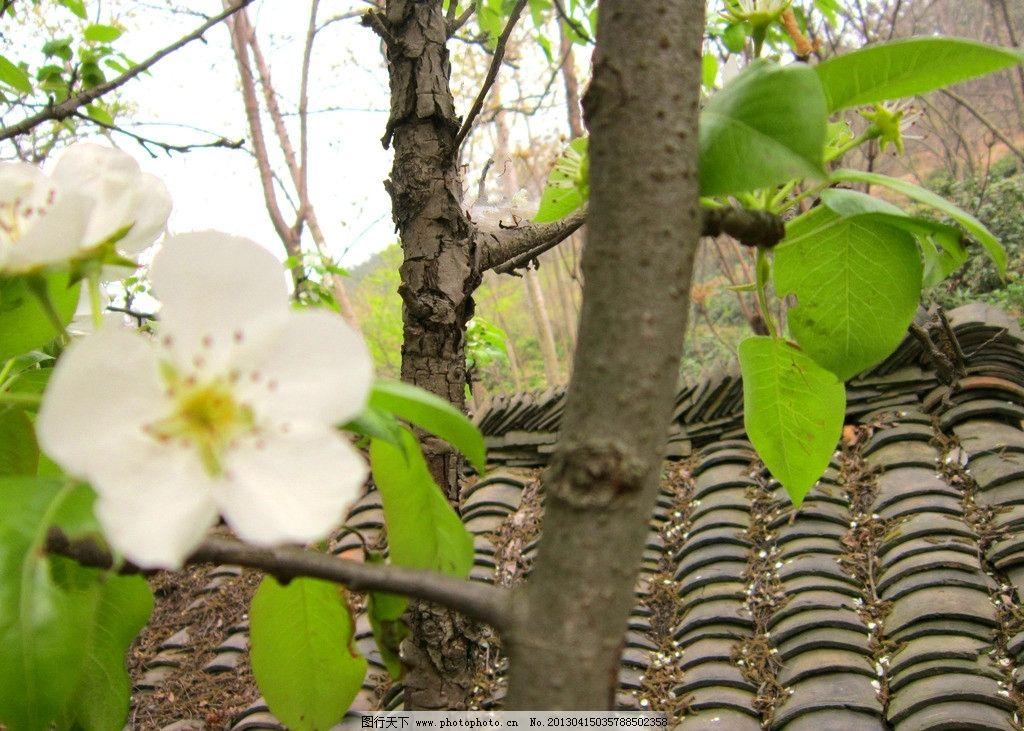 春天小树发芽的图片新闻 小树的灵魂阅读答案 小树网
