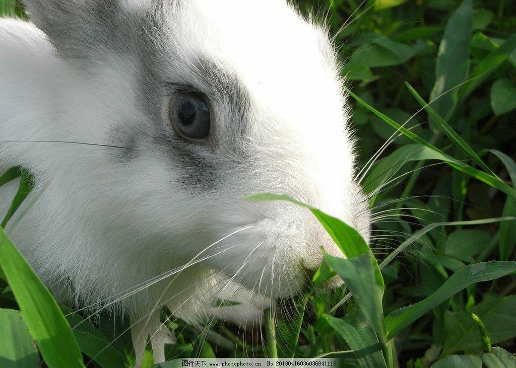 小兔 摄影 兔 动物 可爱 小白兔 其他生物 生物世界 72dpi jpg