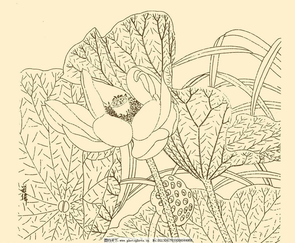 白描花卉 国画 荷花 荷叶 花草 白描花卉素材下载 白描花卉模板下载