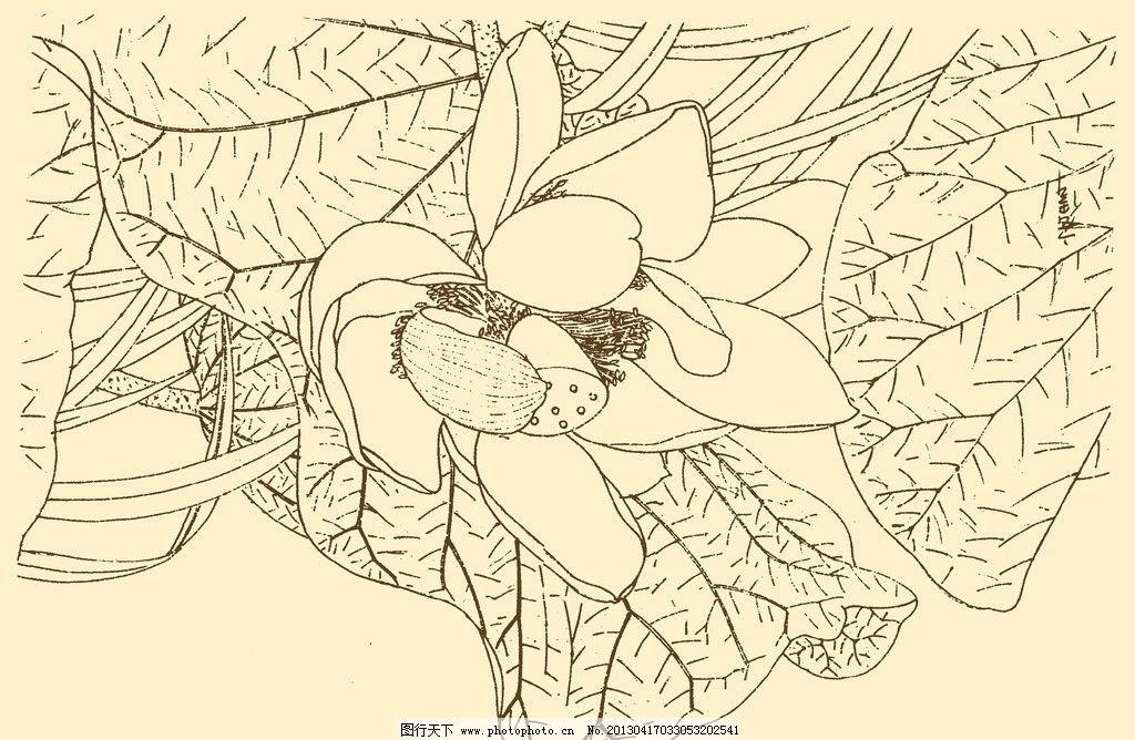 莲花线描画-莲花白描