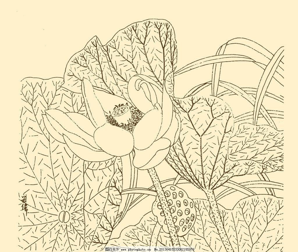 白描花卉 白描 花卉 线描 线画 线稿 中国画 国画 花草 荷花 莲花