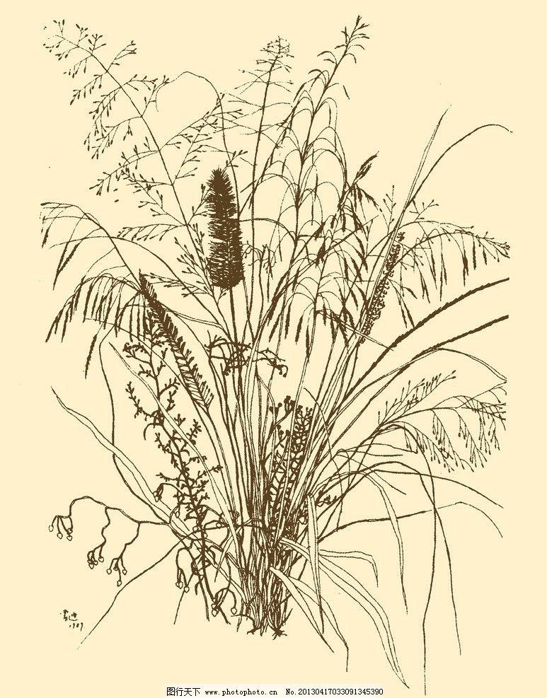 白描花卉图片
