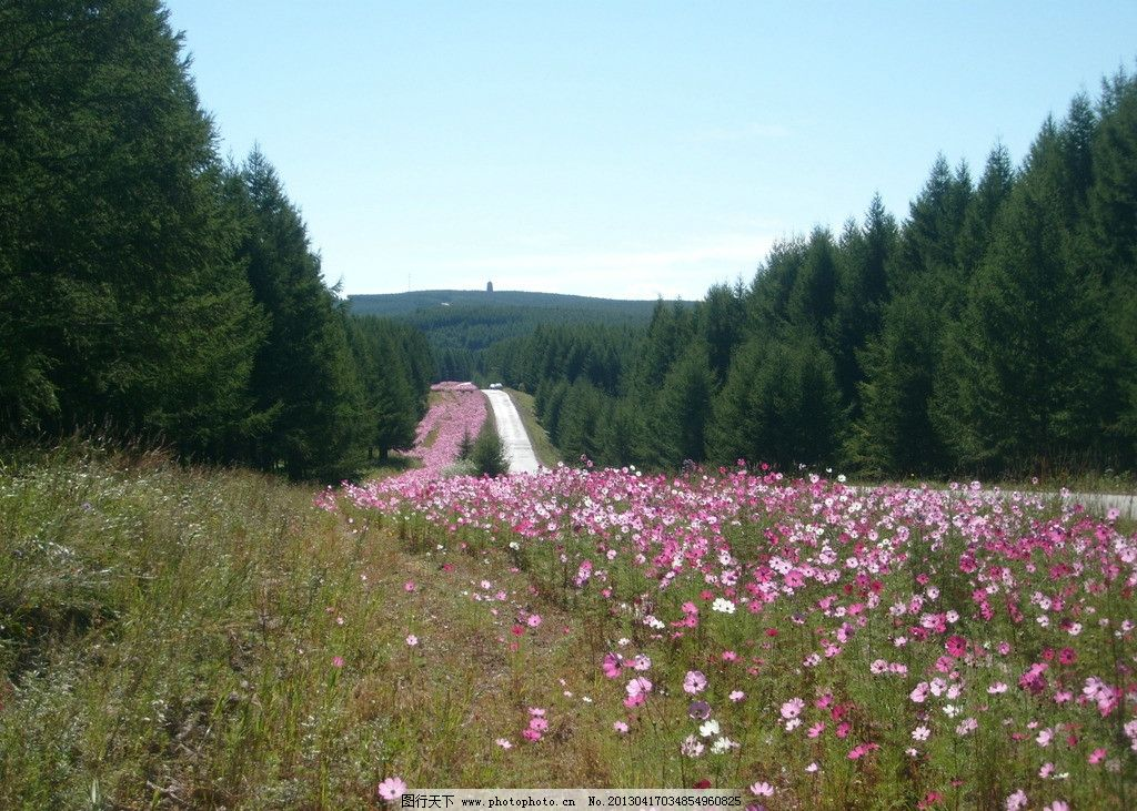 路邊野花 塞罕壩 壩上 森林 草原 野花 自然風景 自然景觀 攝影 96dpi
