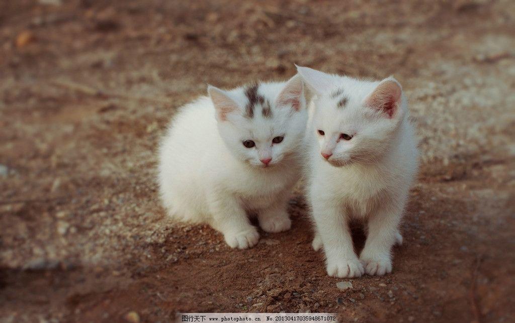 小白猫图片