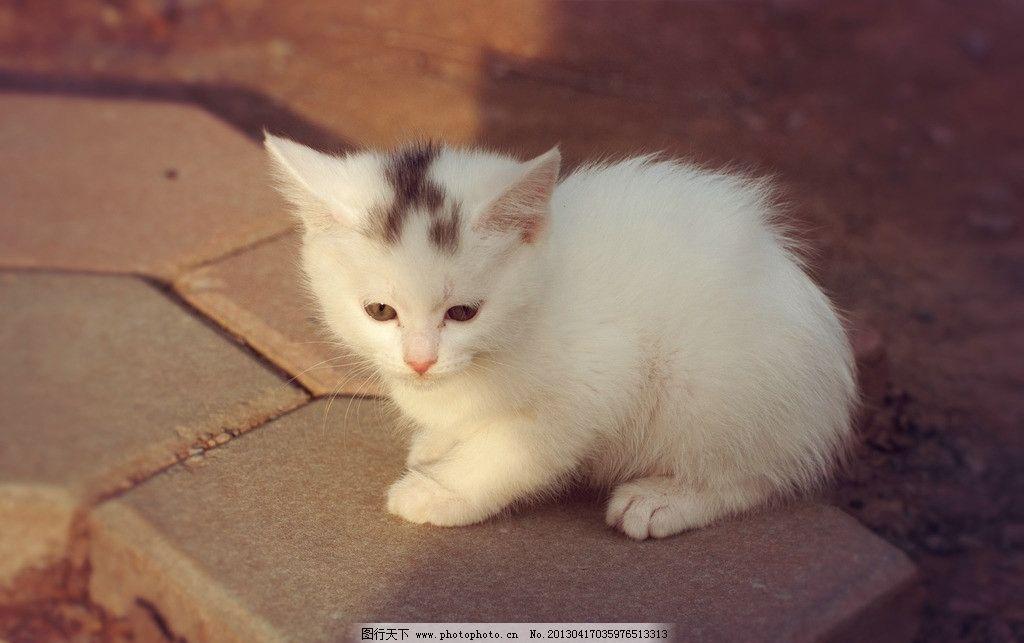 壁纸 动物 猫 猫咪 兔子 小猫 桌面 1024_643