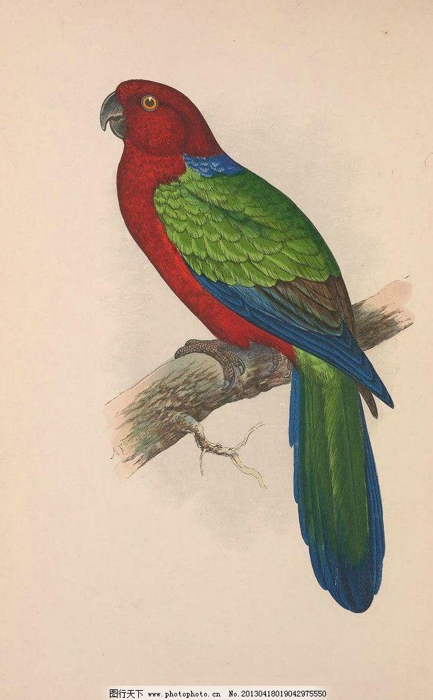 鹦鹉 青鸟 红嘴鹦鹉 雀 福鸟 动物 绘画书法 文化艺术 设计 96dpi jpg