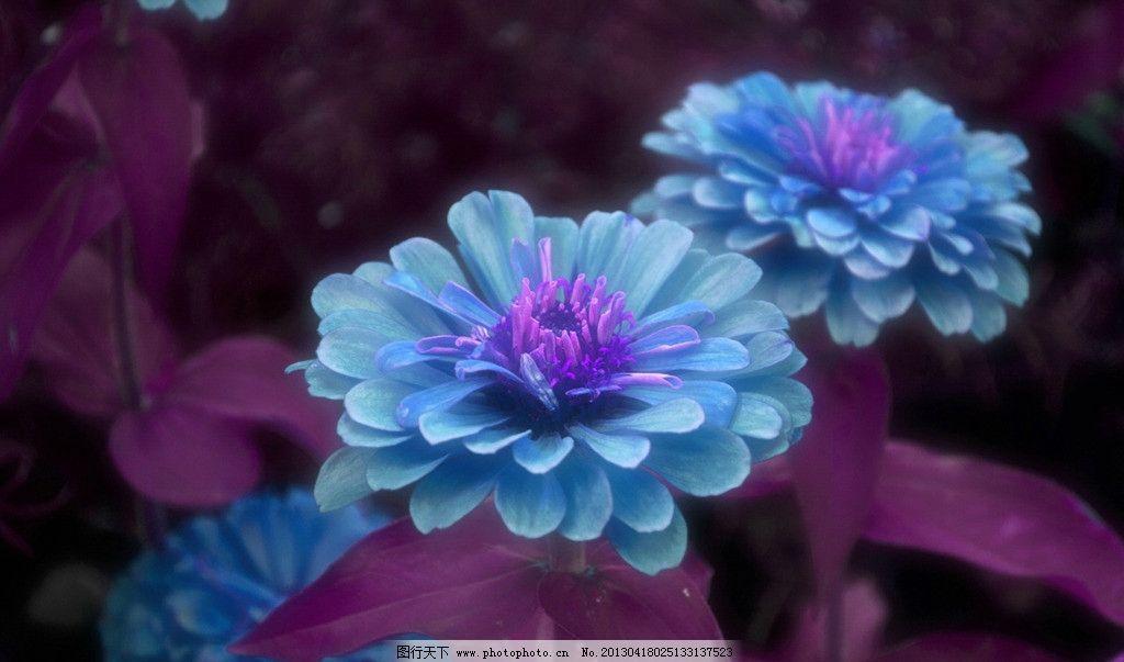 花瓣 壁纸 七彩