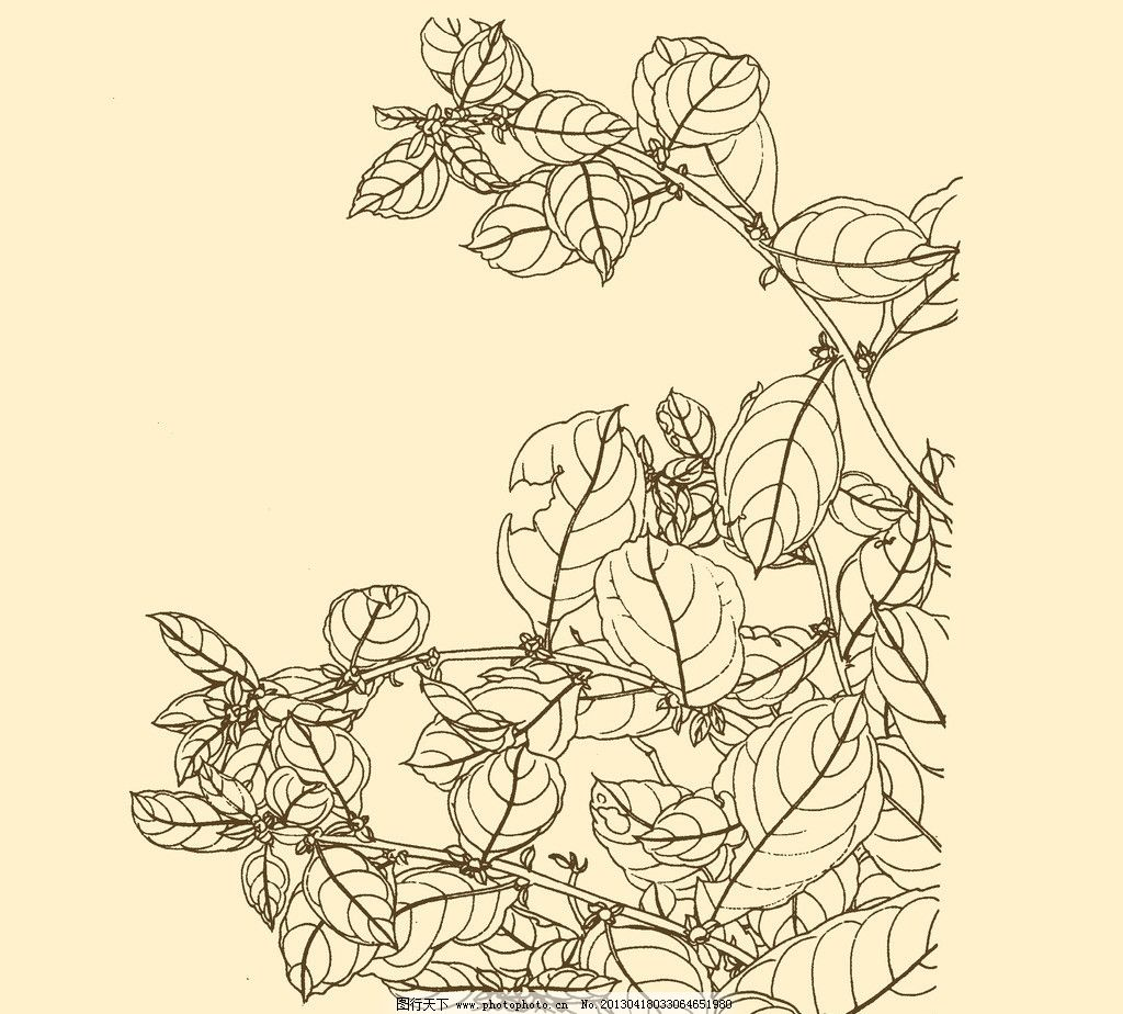 少女植物线描画