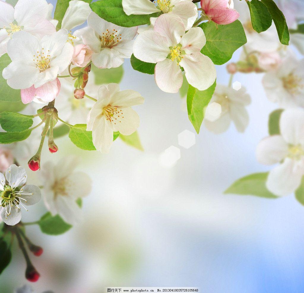 幻苹果花背景 花朵 春天 绿叶 植物 花卉 摄影-桃花桃树花卉花朵杏花