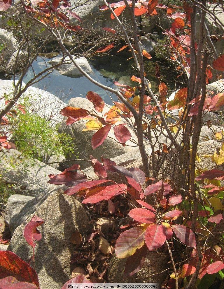 崂山 秋季 树林 青岛户外 树叶 树木树叶 生物世界 摄影 180dpi jpg