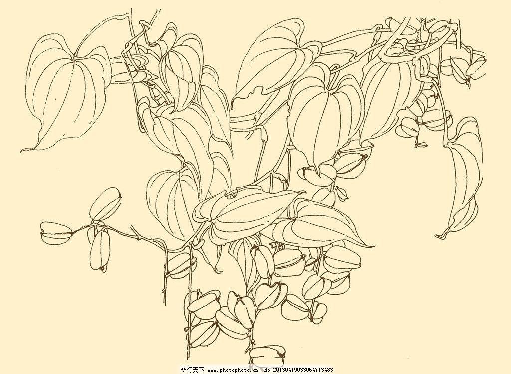 白描花卉 线描 线画 线稿 中国画 花草 源文件