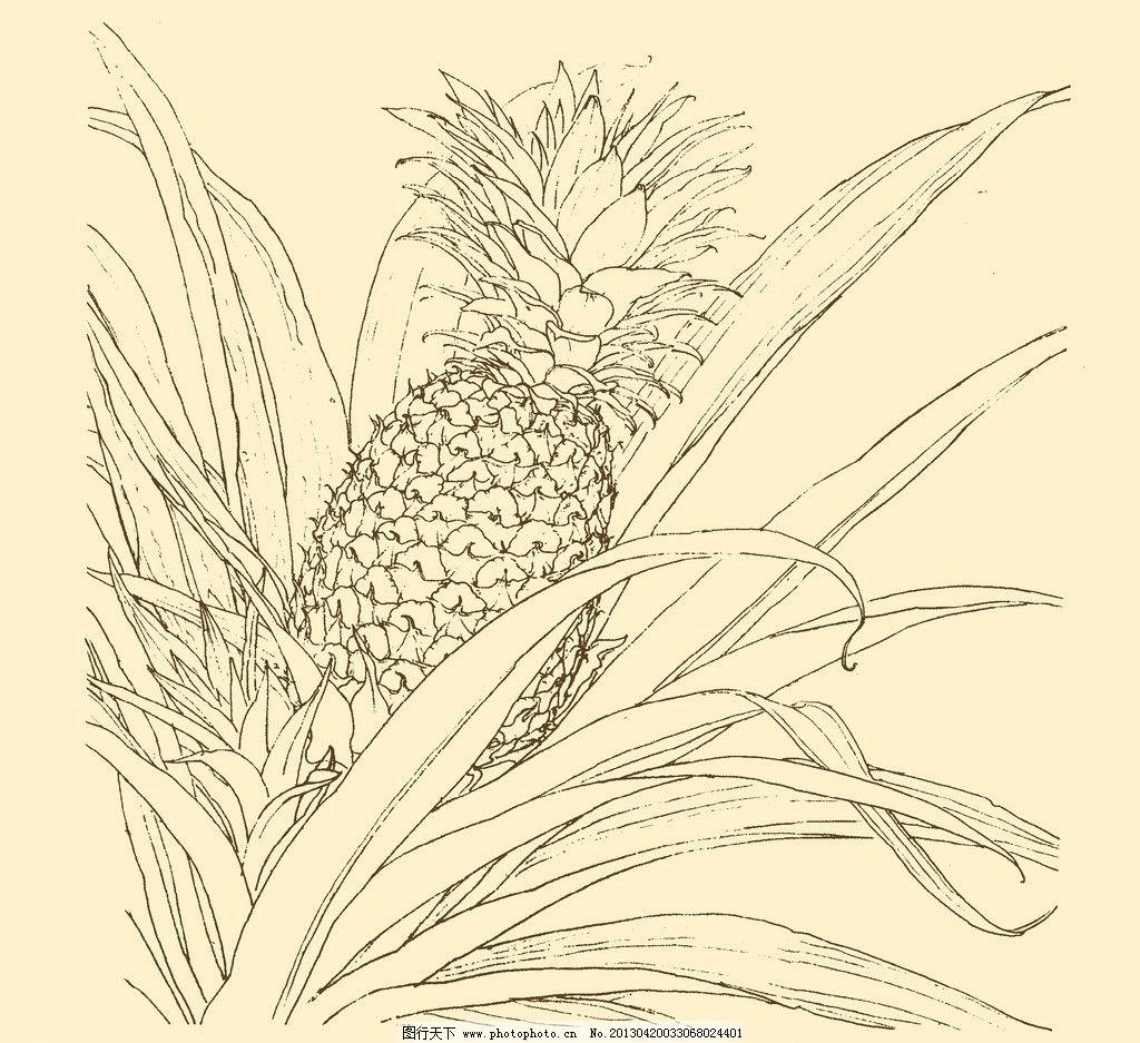 白描花卉 白描 花卉 线描 线画 线稿 中国画 国画 花草 菠萝 凤梨 psd