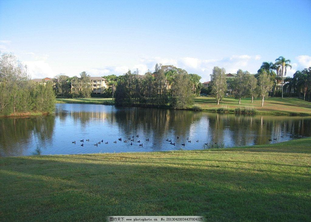湖岸 池塘 草地 鸟 天空 倒影 山水风景 自然景观 摄影