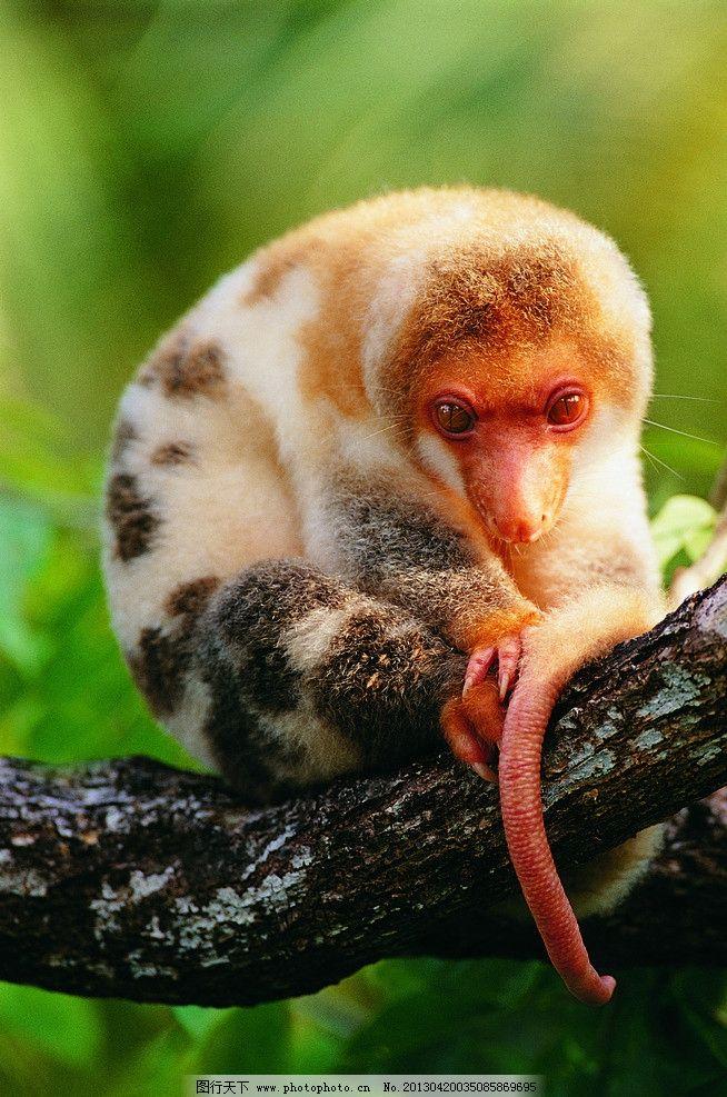 森林动物图片,动物写真 树林动物 树木 高清图片 野生