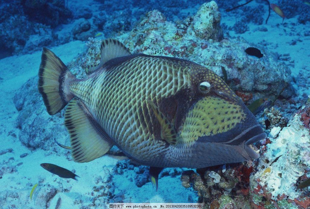 壁纸 动物 海底 海底世界 海洋馆 水族馆 鱼 鱼类 1024_690