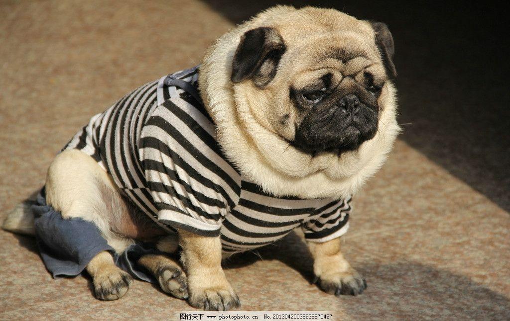 动物穿衣服 丧 图片
