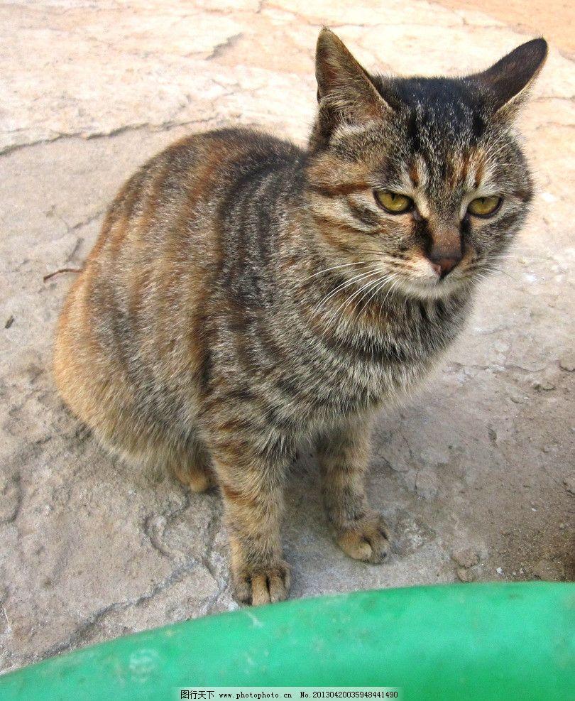 猫咪 小猫 动物写真 家禽家畜 生物世界 摄影 180dpi jpg