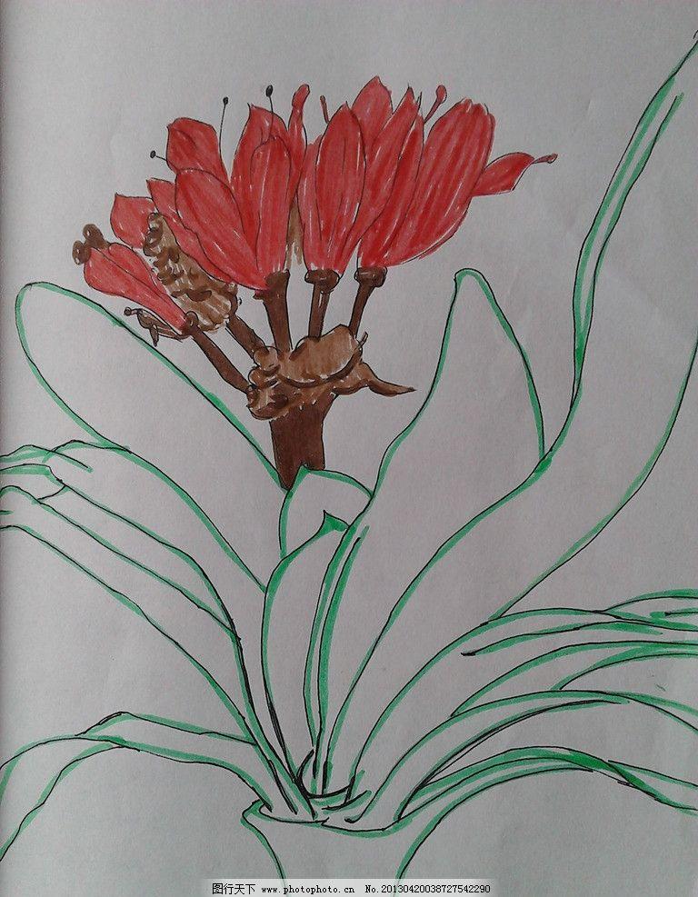 君子兰 手绘 插图 儿童画 示范画 教案画 美术绘画 摄影