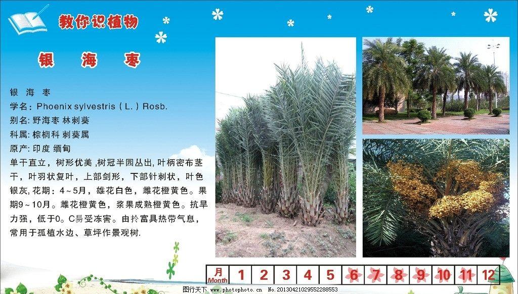 银海枣 野海枣 林刺葵 植物牌 树种说明书 植物属性牌 植物习性牌