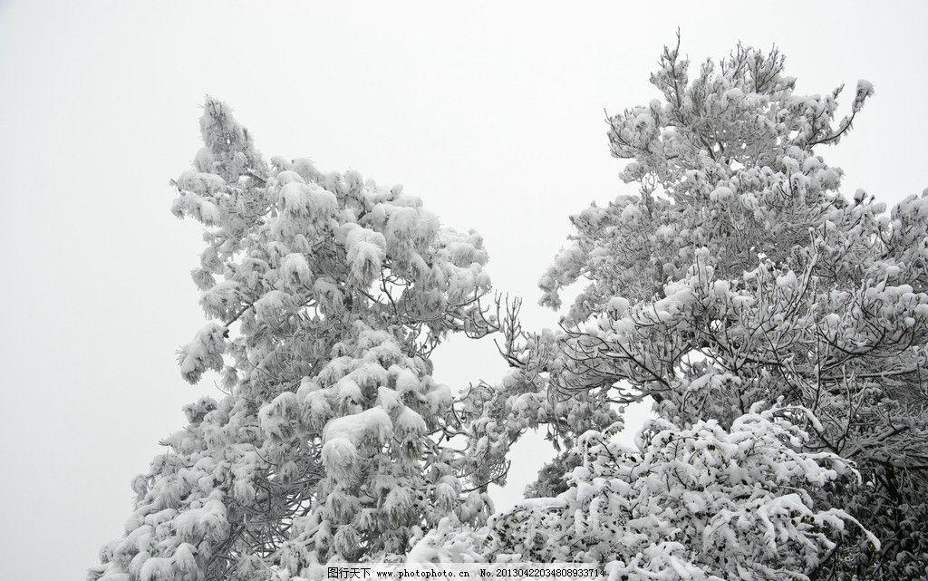 雪松 天空 山谷 树木 森林 雪景 积雪 雪花 雪天 山中雪景